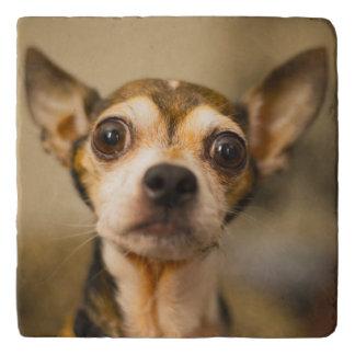 Cute & Funny Dog trivet 4