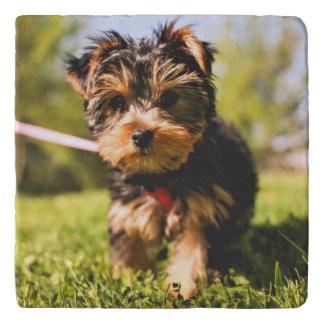 Cute & Funny Dog trivet 9