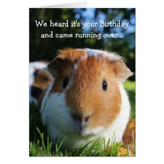 Funny Guinea Pig Birthday Card