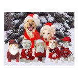 Cute/Funny Pet Business Holiday Client Post Card