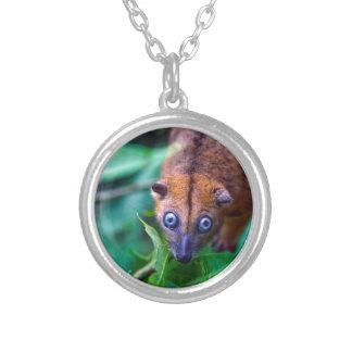 Cute furry cuscus possum looking at camera jewelry