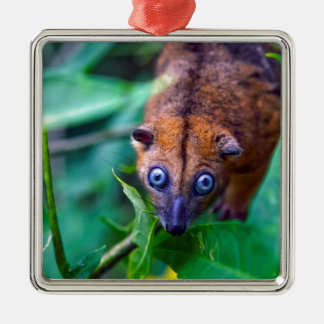 Cute furry cuscus possum looking at camera Silver-Colored square decoration