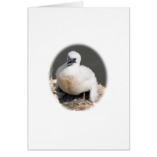 Cute Gannet Chick Greeting Card