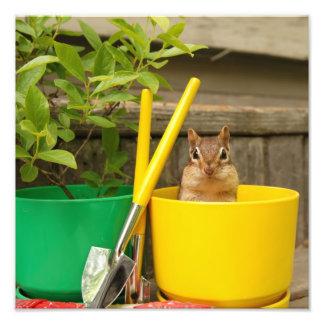 Cute Gardening Chipmunk Photo