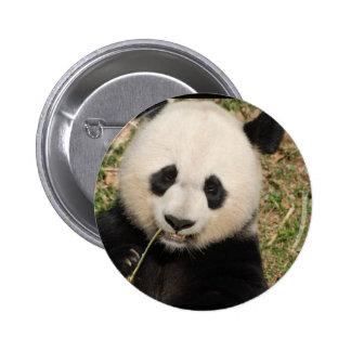 Cute Giant Panda Bear 6 Cm Round Badge