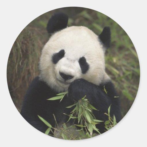 Cute Giant Panda Classic Round Sticker