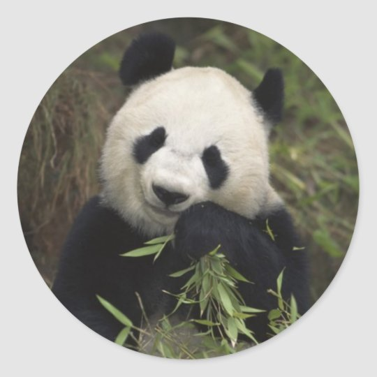 Cute Giant Panda Round Sticker
