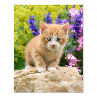 Cute Ginger Cat Kitten Flowery Garden - Paperprint Photo Print