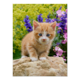 Cute Ginger Cat Kitten in Flowery Garden Pet Photo Poster