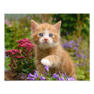 Cute Ginger Cat Kitten in Garden - Paperprint Photograph