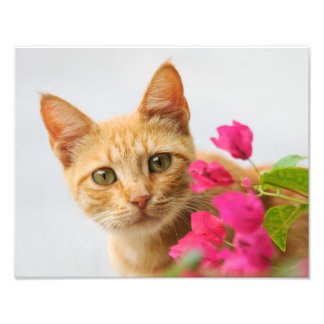 Cute Ginger Cat Kitten Watching - Paperprint Photographic Print