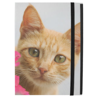 Cute Ginger Cat Kitten Watching Portrait protect