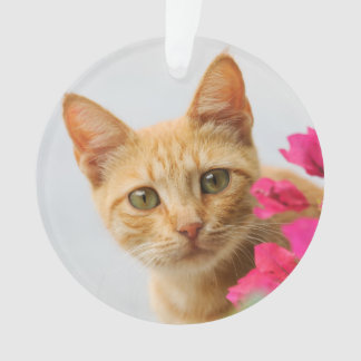 Cute Ginger Cat Kitten Watching You  round acrylic Ornament