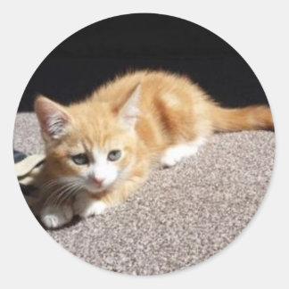Cute Ginger Kitten Classic Round Sticker