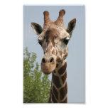 Cute Giraffe Art Photo