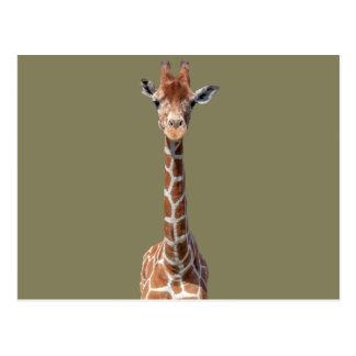 Cute giraffe face postcard