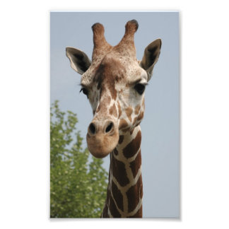 Cute Giraffe Photo Print