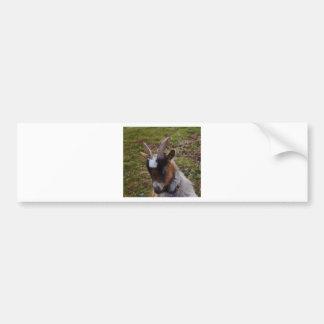 Cute Goat. Bumper Sticker