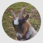 Cute Goat. Round Stickers