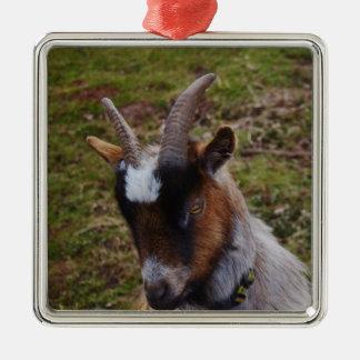 Cute Goat. Silver-Colored Square Decoration