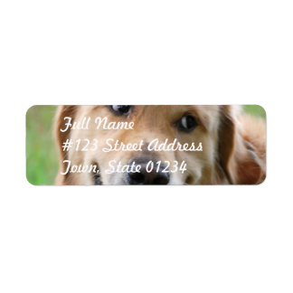 Cute Golden Retriever Mailing Labels