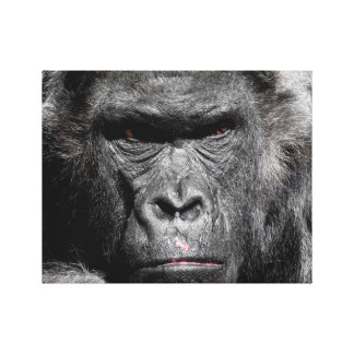 Cute Gorilla Face Staring Intently Wrapped Canvas