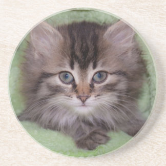 Cute Gray Kitten Under Green Blanket Coaster