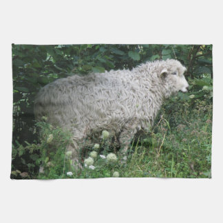 Cute Greedy Sheep Eating Kitchen Towel