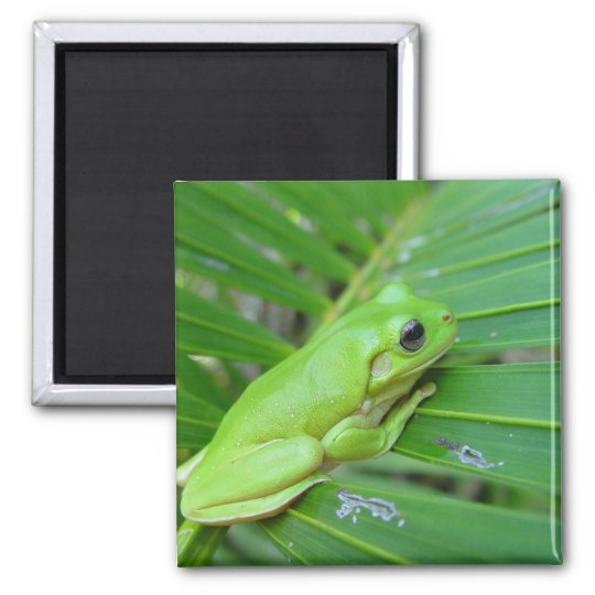 Cute Green Candid Frog On The Leaf Of Palm Square Magnet