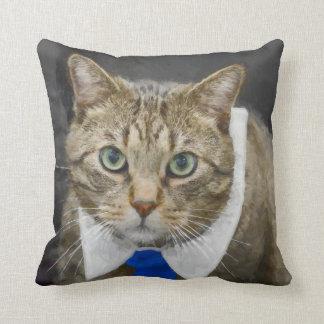 Cute green-eyed brown tabby cat wearing a blue tie cushion