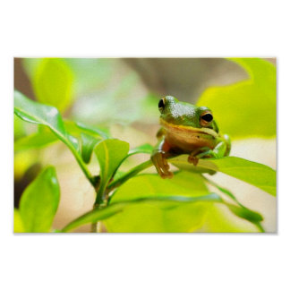 Cute Green Tree Frog Poster