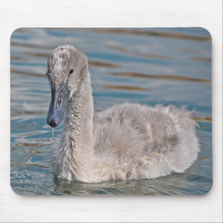 Cute grey baby swan in water mouse pad