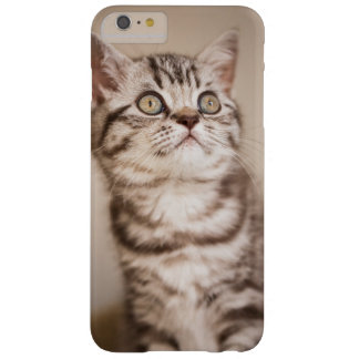Cute Grey British Short Hair Kitten (Blue Tabby) Barely There iPhone 6 Plus Case