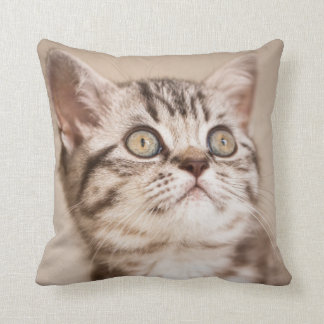 Cute Grey British Short Hair Kitten (Blue Tabby) Cushion