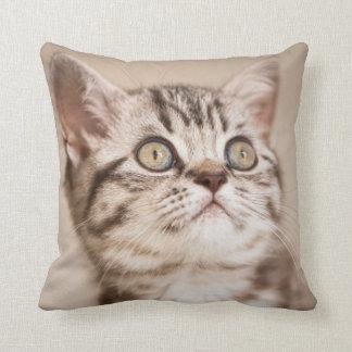 Cute Grey British Short Hair Kitten (Blue Tabby) Cushion