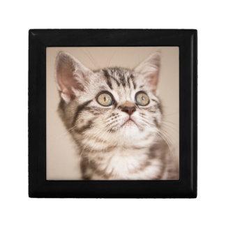 Cute Grey British Short Hair Kitten (Blue Tabby) Gift Box
