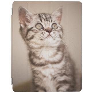 Cute Grey British Short Hair Kitten (Blue Tabby) iPad Cover