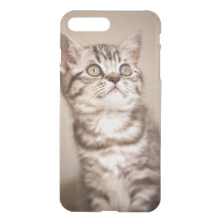 Cute Grey British Short Hair Kitten (Blue Tabby) iPhone 8 Plus/7 Plus Case