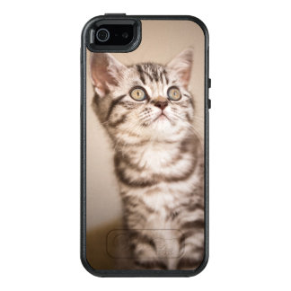 Cute Grey British Short Hair Kitten (Blue Tabby) OtterBox iPhone 5/5s/SE Case
