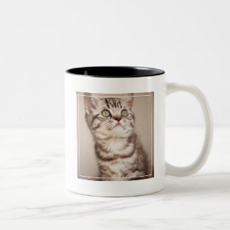 Cute Grey British Short Hair Kitten (Blue Tabby) Two-Tone Coffee Mug