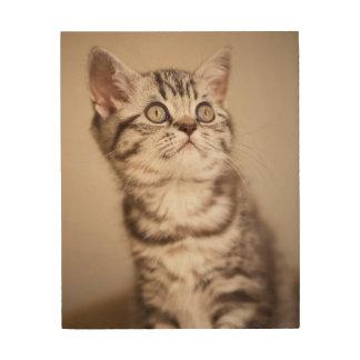 Cute Grey British Short Hair Kitten (Blue Tabby) Wood Print