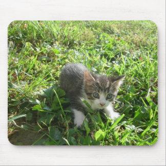 Cute Grey Kitten Mouse Pad
