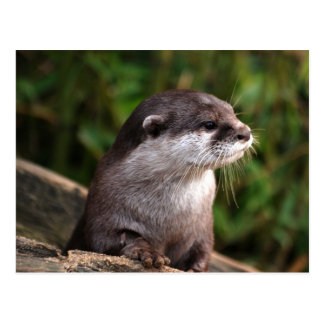 Cute grey otter postcard