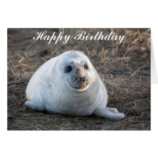 Cute Grey Seal Pup Birthday Card