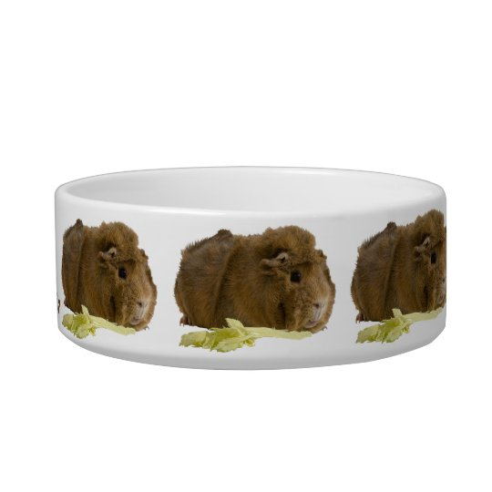 Cute Guinea Pig Eating Celery Photograph Bowl