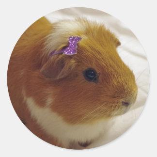 Cute Guinea pig stickers