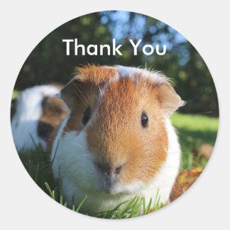 Cute Guinea Pig Thank You Round Sticker