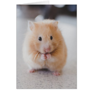 Cute hamster greeting card