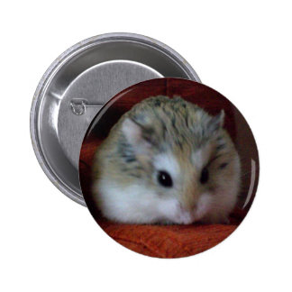 Cute Hamster On A Button - Hammy