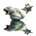 CUTE HARBOR SEAL (sculpted) Wildlife Art Gift Item